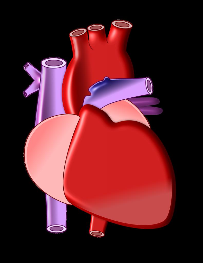 heart-497674_1280