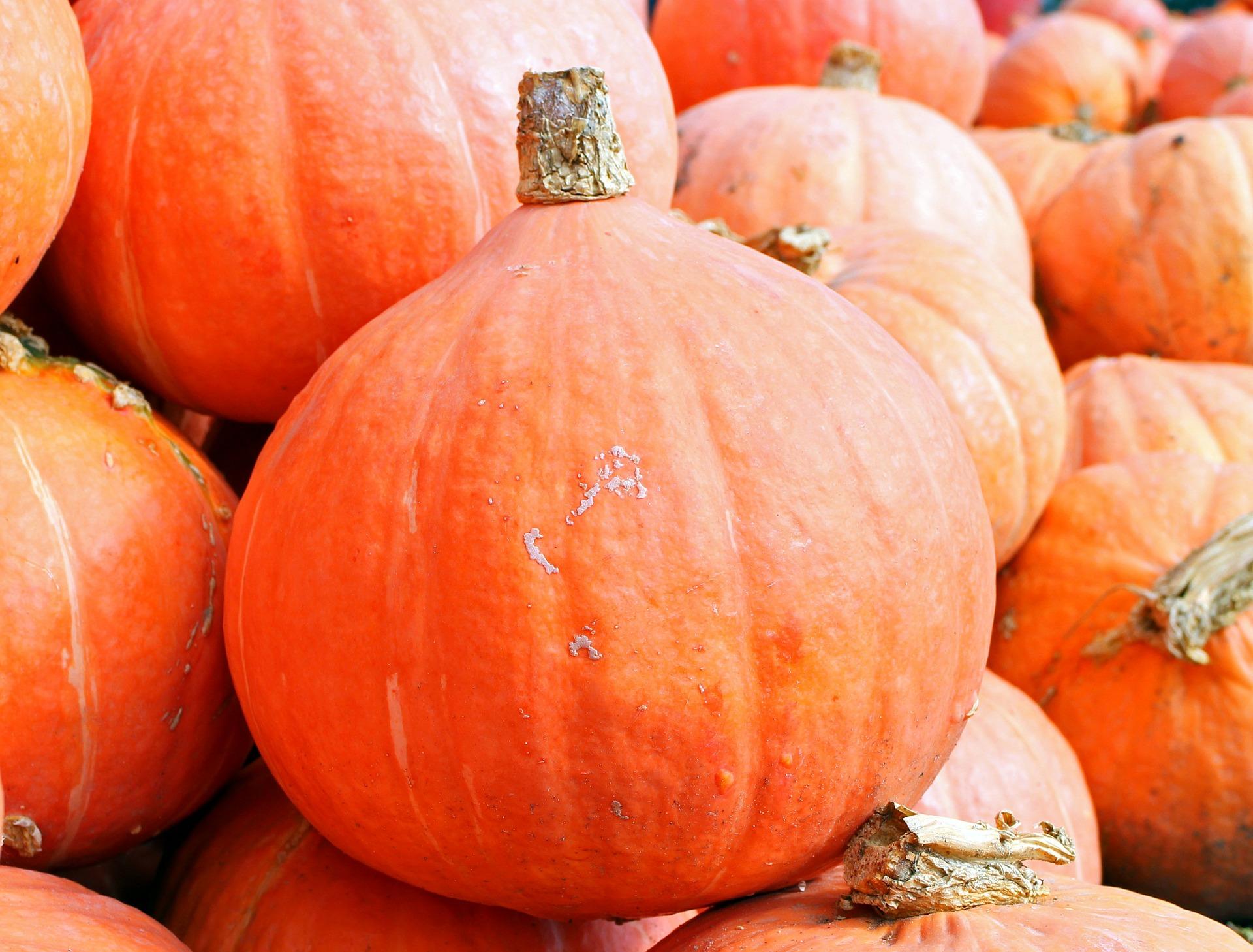 pumpkins-469593_1920
