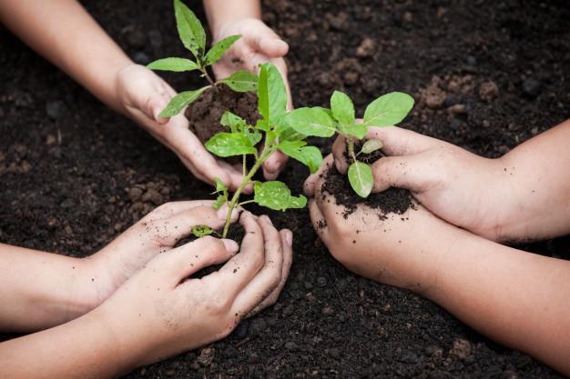 le-mani-dei-bambini-che-piantano-il-giovane-albero-su-suolo-nero-insieme-come-conservano-il-concetto-del-mondo_7186-941