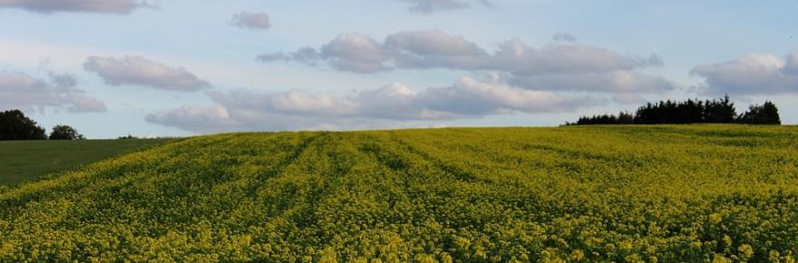 green-manure-4536871_960_720