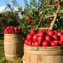 orchard-1872997_960_720